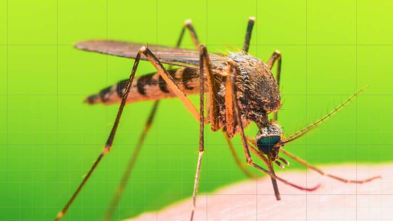 Insekteschutzgitter